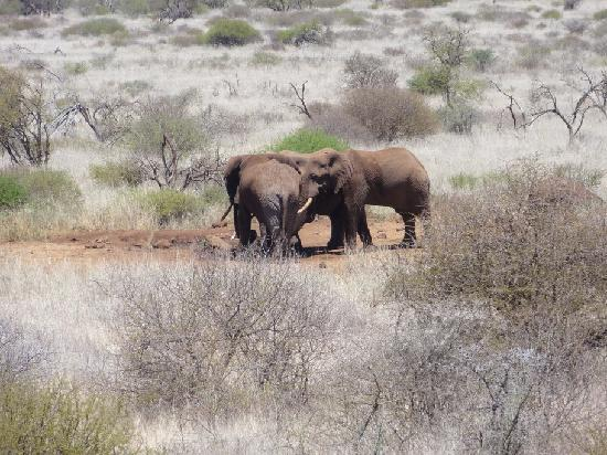 Satao Elerai: Elephants at the water hole