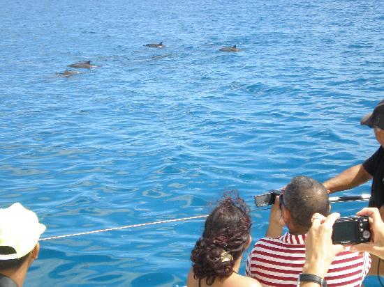 Mauricia Beachcomber Resort & Spa: les dauphins
