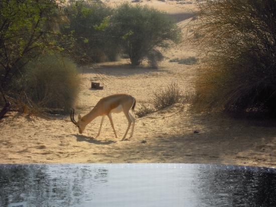 منتجع المها الصحراوي: il paesaggio