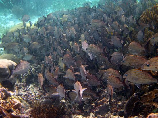 National Reef Park of Puerto Morelos: Lots of fish
