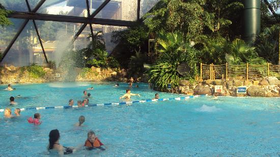 Squirrels picture of center parcs sherwood forest - Elveden forest centre parcs swimming pool ...