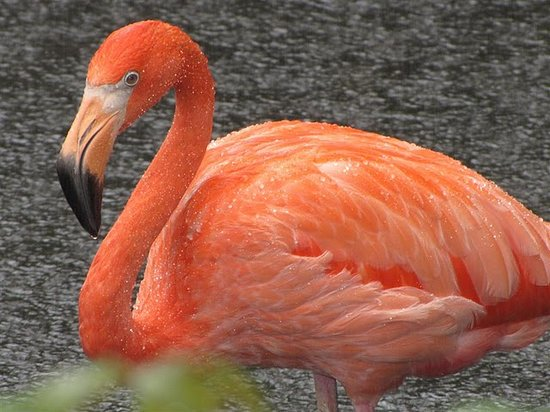 National Aviary : flamengo