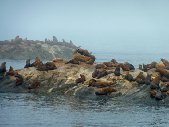 Glacier Bay National Park and Preserve, AK: Sea lions in the mist