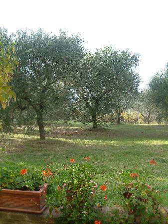 Monticchiello, Italia: View from my patio at Maribelle 2