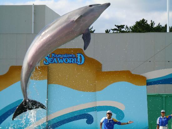Kamogawa SeaWorld: イルカショー