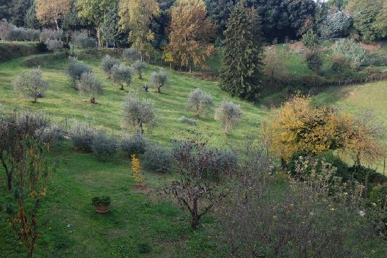B&B Villa Peragnola : Vista dalla ns camera