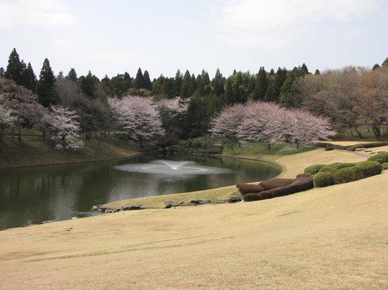 Kawamura Memorial DIC Museum of Art: 美術館&レストランから見渡せる庭園