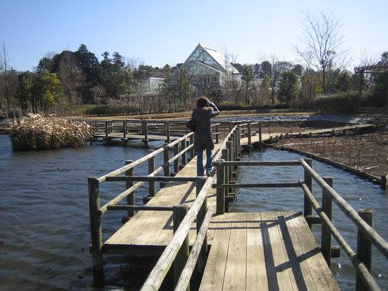 Noda, Japan: 池には遊歩道が完備されています。ここを歩くのは菜のしいです♪
