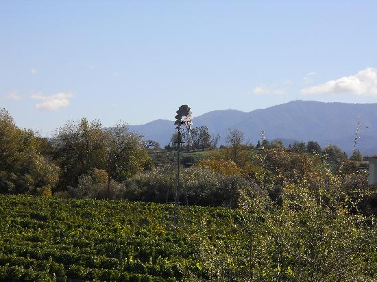 Stagecoach Wine Tours Santa Ynez: Linwood
