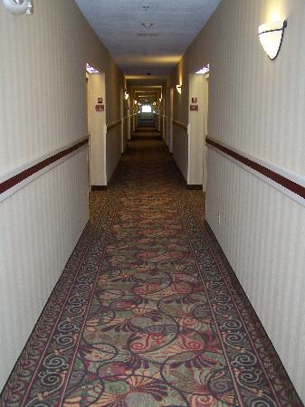 Hampton Inn & Suites Palm Desert: Hallway New Carpet