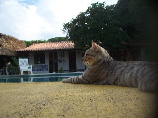 The Dreamer Hostel: Tigre (the hostel cat), the pool and the hostel...