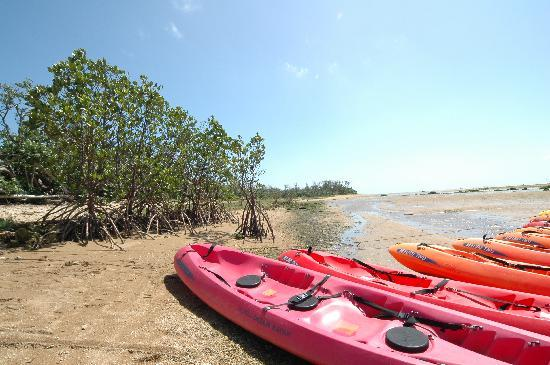 Miyara River Hirugi Grove: 休憩中のボート達