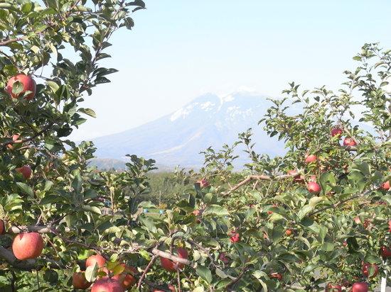 Hirosaki, Japan: リンゴ公園からの岩木山