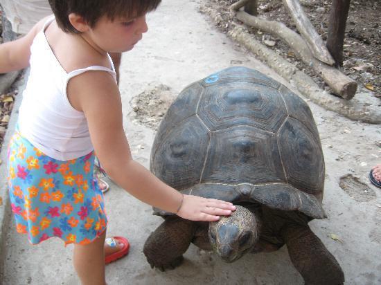 Kiwengwa, Tanzânia: isola di Bawe tartarughe giganti