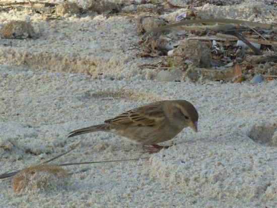 Alhambra Thalasso Hotel: petit oiseau sur la plage
