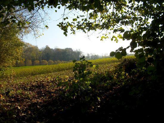 La Morra, Itália: farmland