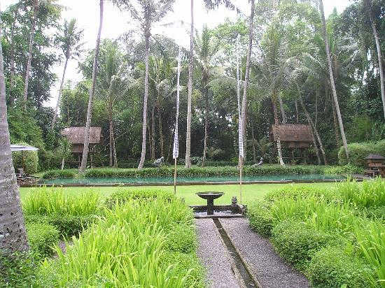 Puri Tupai : view from back verandah