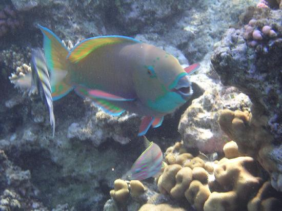 Halomy Hotel : Fishes on the house reef