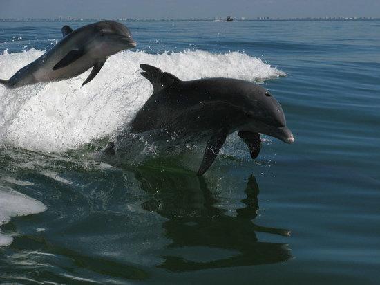 Southwest Gulf Coast Pet Friendly Vacation Rentals