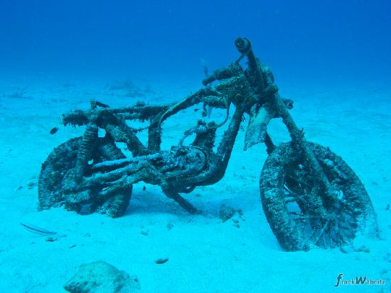 Overgrown motorcycle at motorcycle reef akumal - Dive shop mexico ...
