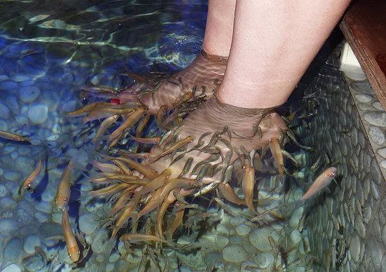 Kenko Fish Spa