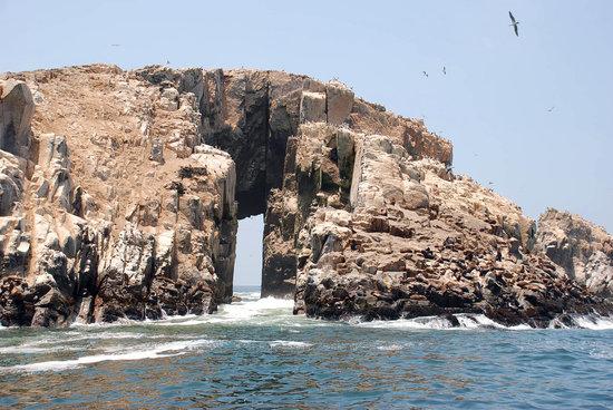 Tour Lobos del Callao