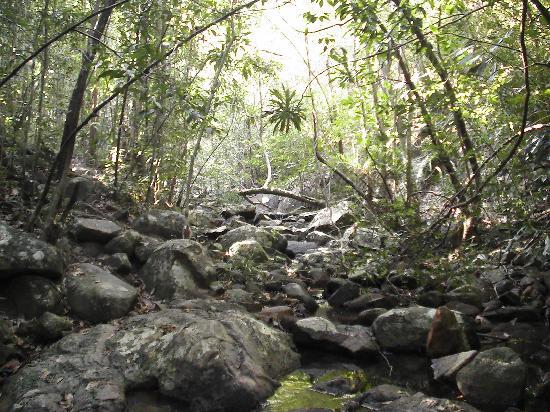 Pulau Redang, Malásia: Mitten im Dschungel