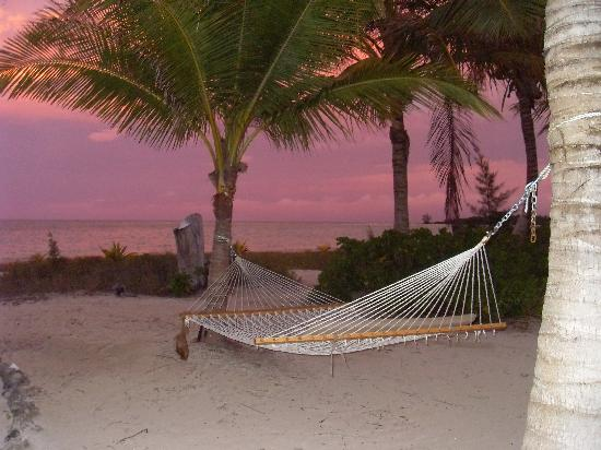 Kamalame Cay : Hammock in front of coco plum