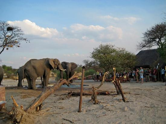 Nata, Botswana: close encounters