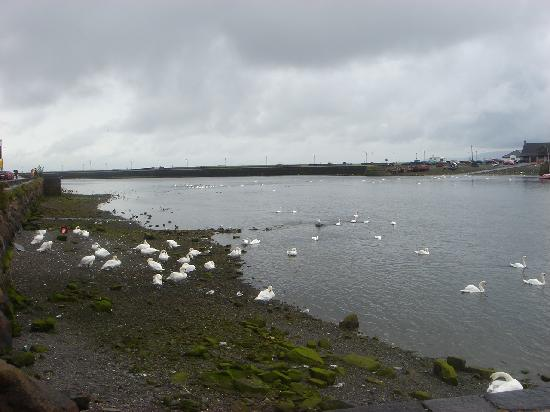 Northern Ireland, UK: Bahía de Galway con cisnes
