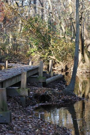 Abbott's Mill Nature Center: Walking Path to the Mill