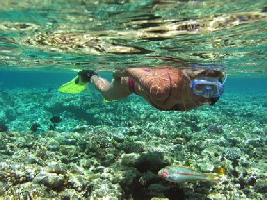 Maui Island Activities: Kayaking and Snorkeling in Maui is the best!