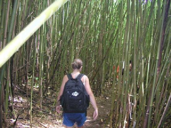 Maui Island Activities: Beautiful hike through the bamboo forest and waterfalls!