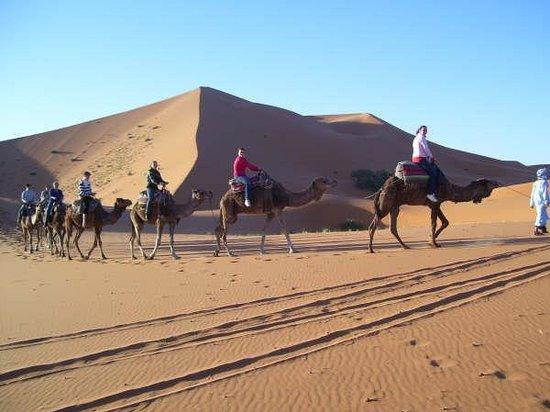 Auberge Les Pyramides: camel  tours