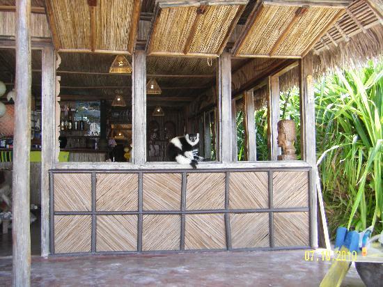 Hotel La Petite Traversee: The Bar + 1 noisy lemur