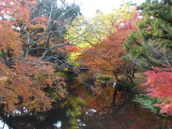 ยุฟุ, ญี่ปุ่น: 綺麗!
