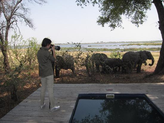 Great Plains Conservation Zarafa Camp: The elephants came to our tent one afternoon