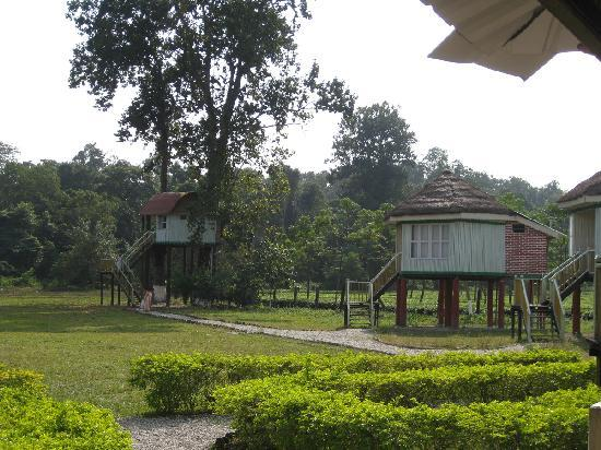 Gorumara Elephant Camp : The Grounds