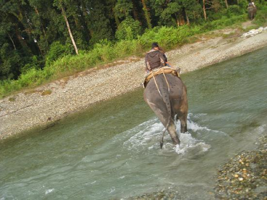 Gorumara Elephant Camp : Crossing the river on an Elephant!