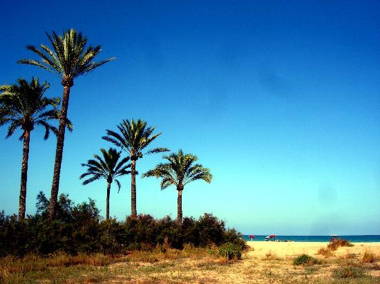 Camping Malvarrosa de Corinto: Playa con palmeras