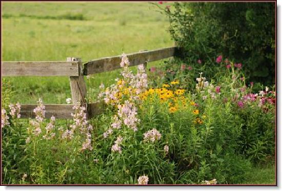 Drover Hill Farm B&B: Flowerbed