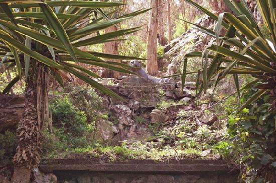 Cerro del Toro : jaguar in the woods
