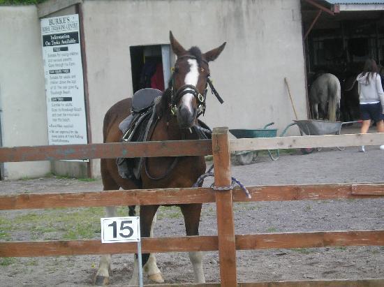 Olde Glenbeigh Hotel : horsing around pony trekkking
