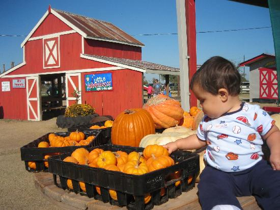 Dewberry Farm: Lots to see and touch.