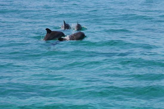 Villa Renaissance : Dolphins on our way to French Cay