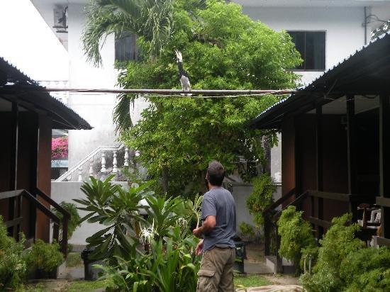 Nipah Bay Villa: One part of the garden