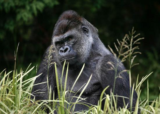Photo of Zoo ZSL London Zoo at Regent's Park, London NW1 4RY, United Kingdom