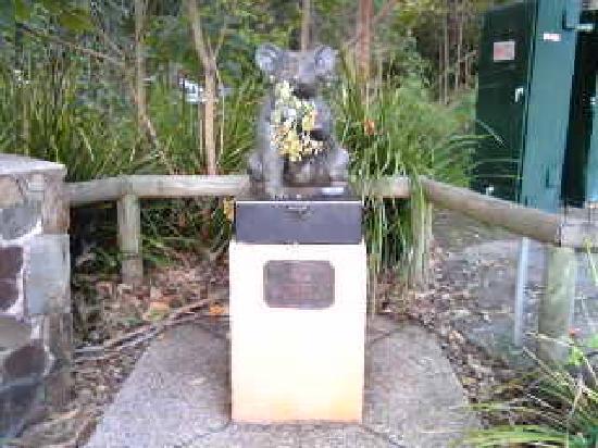 Noosa, Australia: ユーカリを持つコアラ