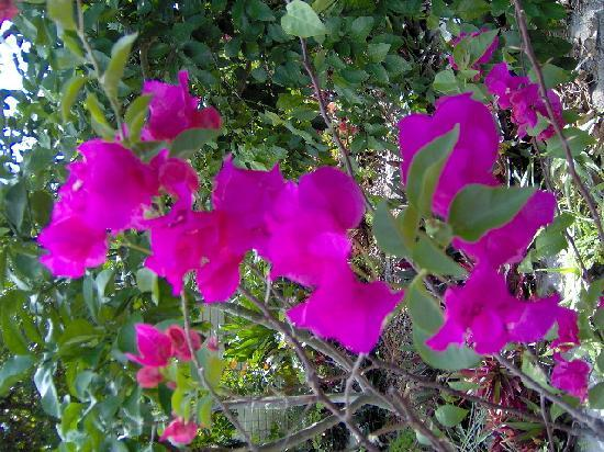 Xaman Ek Resort & Spa: Mike's talents in bloom