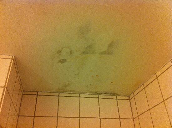 Scandic Bygholm Park : Fungus on bathroom ceiling